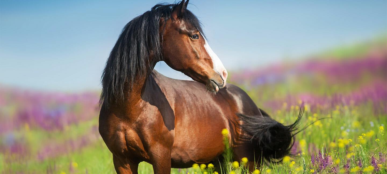 Leckmasse für Pferde