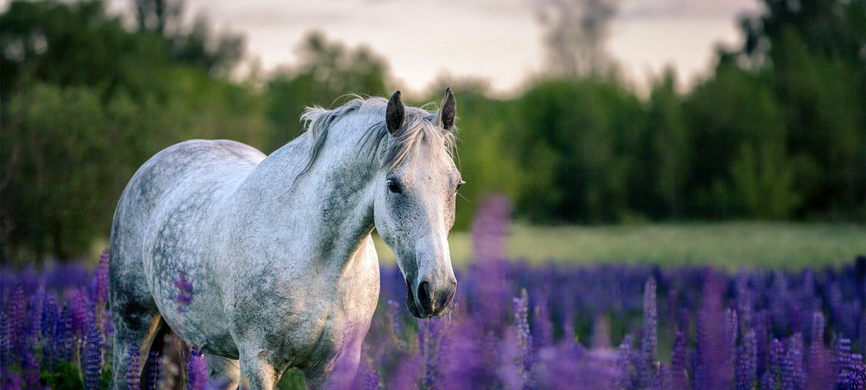 Mineralfutter und Ergänzungsfutter für Pferde