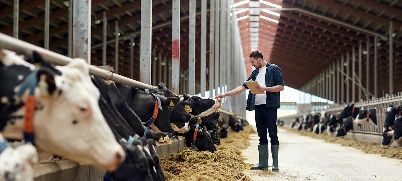 Ökologische Produkte für Rinder